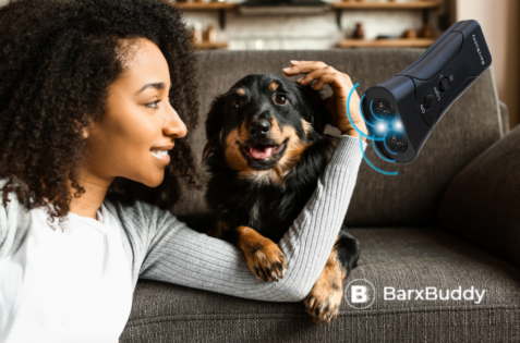 BarxBuddy Shares The Best Training Tips For New Dog Owners
